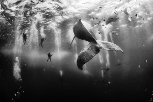Whale Whisperers